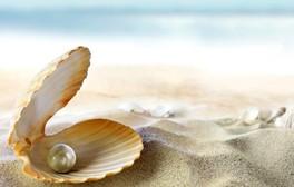 seashell-beach-sand-perl