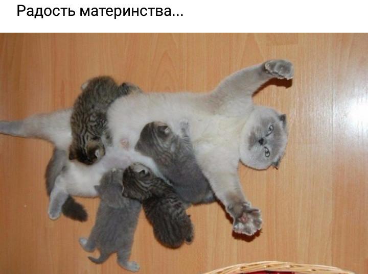 Не смогла не поделиться))😂😉