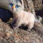 Кошечка Ася, невская порода, 19 см
