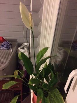 Цветы в моем доме